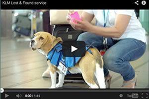 Una mascota devuelve objetos perdidos en el aeropuerto Schiphol